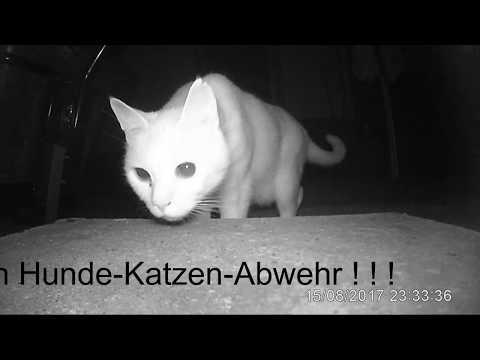 das passiert wenn man eine Katze verscheucht