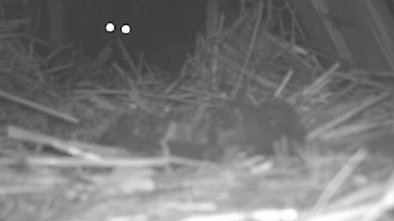 Поставил камеру и офигел! вот кто шумел по ночам...