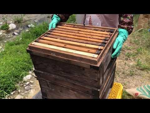 , title : '超初心者の初めての養蜂、初めての内検