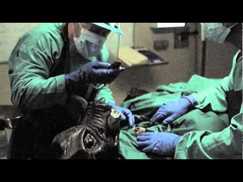 Duke Nukem Forever's 'Autopsy' Video Is Its Grossest To Date