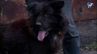 НТ удалось встретиться с собакой, запертой в одном из дворов по Большой Московской, и ее хозяином