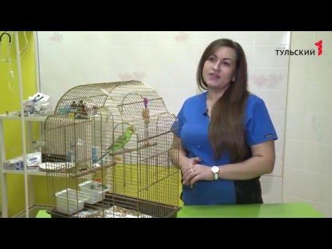 Советы ветеринара. Содержание попугая