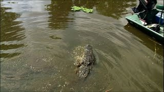 Dealing with Dangerous Florida Alligators | Ultimate Killers | BBC