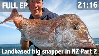 Landbased big snapper in NZ Part 2