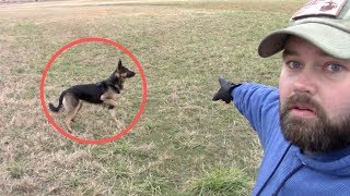 German Shepherd Saved My Kids From WILD DOG In Broad Daylight!