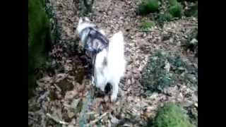 preview picture of video 'Maska al Quarto...dog trekking....'