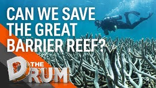 What's being done to save the Great Barrier Reef?   The Drum