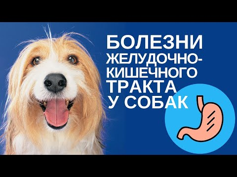 Болезни желудочно-кишечного тракта у собак