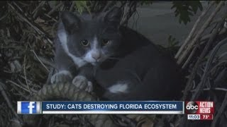 Report: Cats kill billions of animals a year
