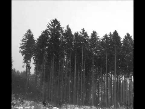 Misty Forest - Misty Forest - Ozveny hôr