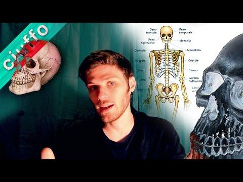 Applicazione traumel di unguenti con osteocondrosi