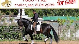 sold: PRE stallion, nac. 21.04.2009
