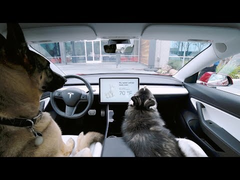 Tesla Introduces a Temperature Regulating 'Dog Mode' That Assures Passersby That the Dogs Within Are Safe