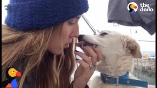 Stray Puppy Befriends Travelers Who Find Him a Home  | The Dodo