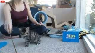 Tiny Kittens Shelly opens present and Marvie being over the top cute