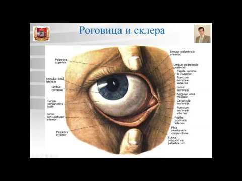 Петрозаводск центр коррекции зрения на ленина