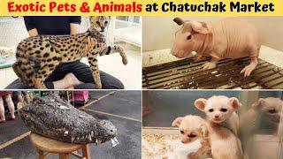 Bangkoks Chatuchak Market | Exotic Pets & Animals | Ultimate Shopping Experience 💲🎁