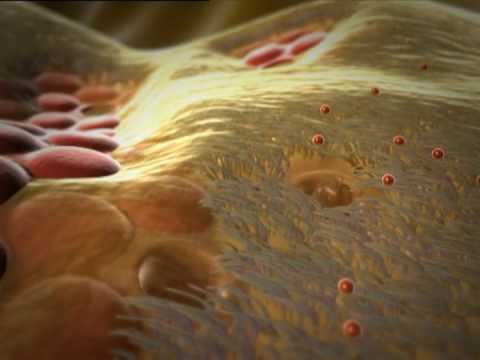 Das Wasserstoffperoxid für die Behandlung gribka auf den Nägeln