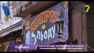 Конфликт в Одесском цирке: зоозащитники возмущены ненадлежащим содержанием медведей