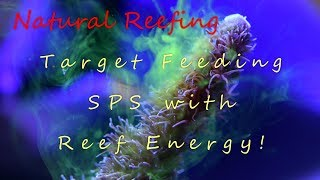 Target Feeding SPS with Reef Energy