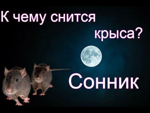 Сонник: Увидеть во сне крысу (мышь) Толкование снов