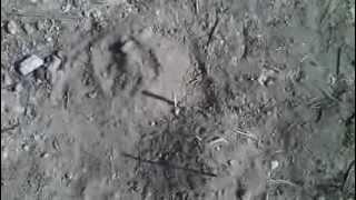 preview picture of video 'Американцы на луне. Доказательство с тенями.'