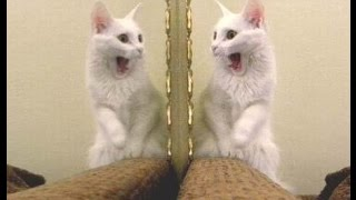 Animals In Mirrors Hilarious Reactions Compilation 2016    Funny Animal Videos