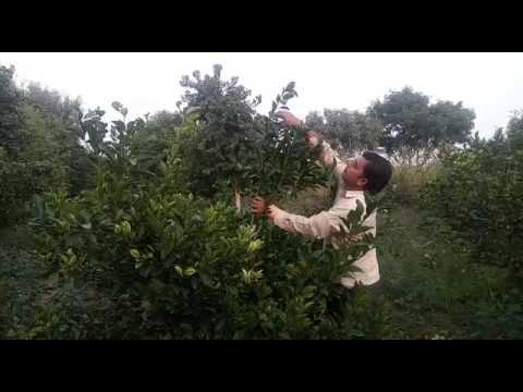 Progressive Farmer from Rajasthan- Rajnish Lambha ( Hardev Baag & Udhyan Nursery) - 2