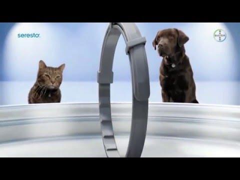 Collar Seresto® Collar Anti-pulgas, Garrapatas, Larvas y Piojos - Perros y Gatos