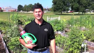 How to Feed Your Plants Properly