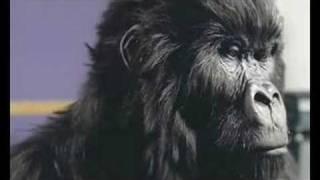 Cadburys Gorilla & Party On Damien Dempsey