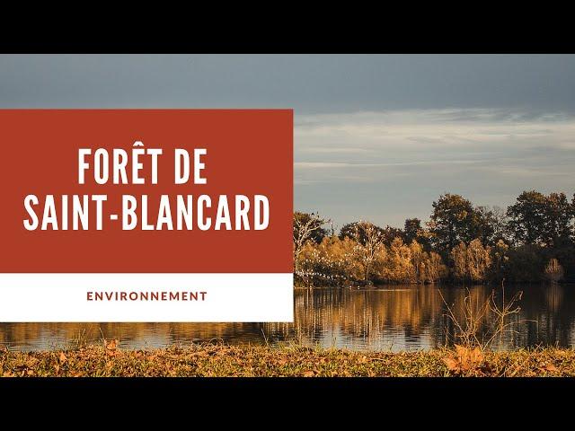 Forêt de Saint-Blancard