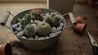 Vlog 04:  DIY Cactus Garden + Berlins Botanical Garden