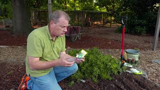 Sowing Seed For A Fall Vegetable Garden
