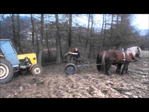 Dziewczynka pod patogenu koni