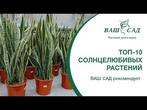 ТОП-10 солнцелюбивых растений. Майя рекомендует. Ваш сад