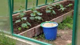 Испльзование опилок в огороде видео