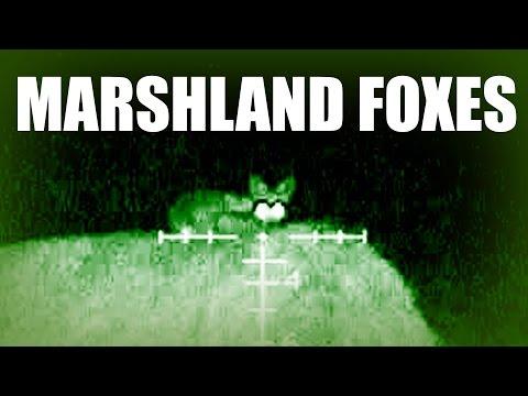 Roys Marshland Foxes