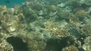 preview picture of video 'Under water - Egypt Safaga  snorkeling 2014'