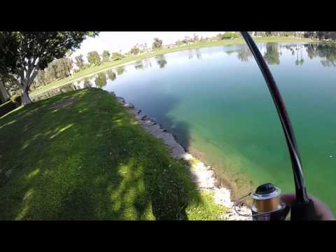 California Pond Bass Fishing
