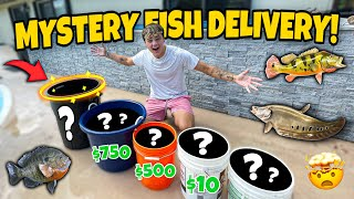 BUNCH of *NEW* FISH for 4000G BackYard POND!! (mystery delivery)