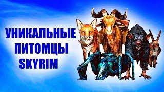 SKYRIM - НОВЫЕ УНИКАЛЬНЫЕ ПИТОМЦЫ Creation Club
