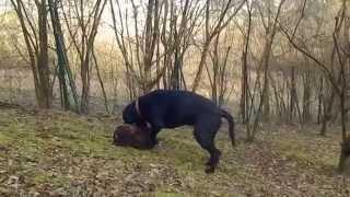 preview picture of video 'Ares, der Waldarbeiter Teil 2 | Leihfrauchen - Julia Weber, Tierbetreuung mit Herz'