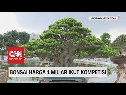 Ini Wujud Bonsai Seharga 1 Miliar yang Ikut Festival di Surabaya