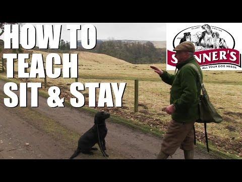 Gundog training tips – Sit and stay