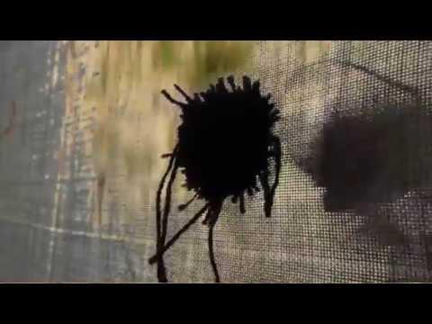 Fekete pont. Péter Ágnes videója, 2017