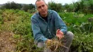 Virginia Farm Bureau - In the Garden - Winter Potatoes