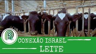 O que faz com que Israel seja o campeão mundial em produtividade de leite por animal
