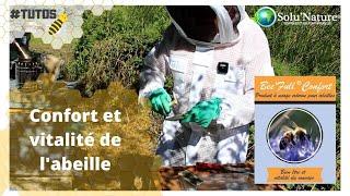 Bee'full confort : pour le bien-être et la vitalité du couvain