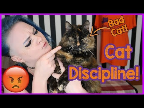 How to Discipline Your Cat Carefully and Kindly! Tips on how to ...